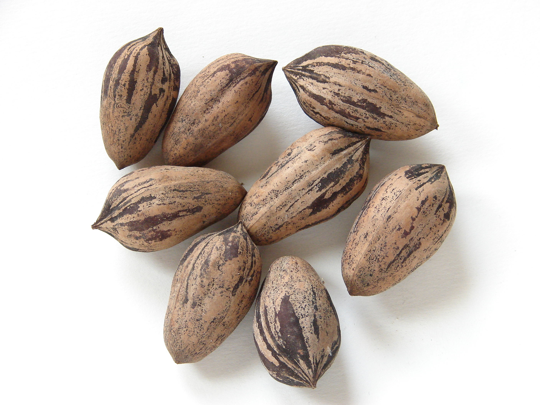 Få styr på dit kolesterol med Pekannødder